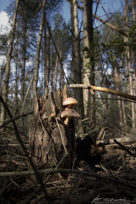 Bobolice, Październik 2010. Mimo, iż mocno zdewastowany przez ciężką zimę, las wciąż żyje.